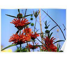Floral Spike Poster