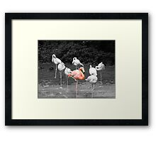 Am i the only one that is Pink? Framed Print
