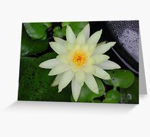 Touch of grey - Glow in a drizzle Greeting Card