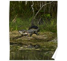 Cypress Alligator Poster