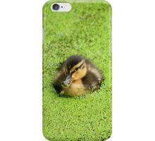 Duckling in Duckweed iPhone Case/Skin