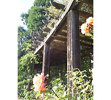 Berkeley Rose Garden Photographic Print