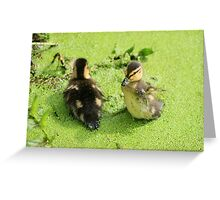 Tiny Wings Greeting Card