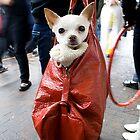 Doggy Bag... Winter Magic Festival 09 Katoomba by JennyMac