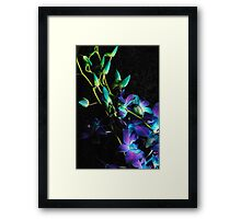 Purple Orchid Buds Framed Print