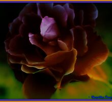 The Fragrance Of The Rose... by DeeprBlue