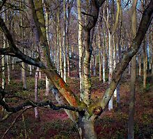 Trees by Mick Smith