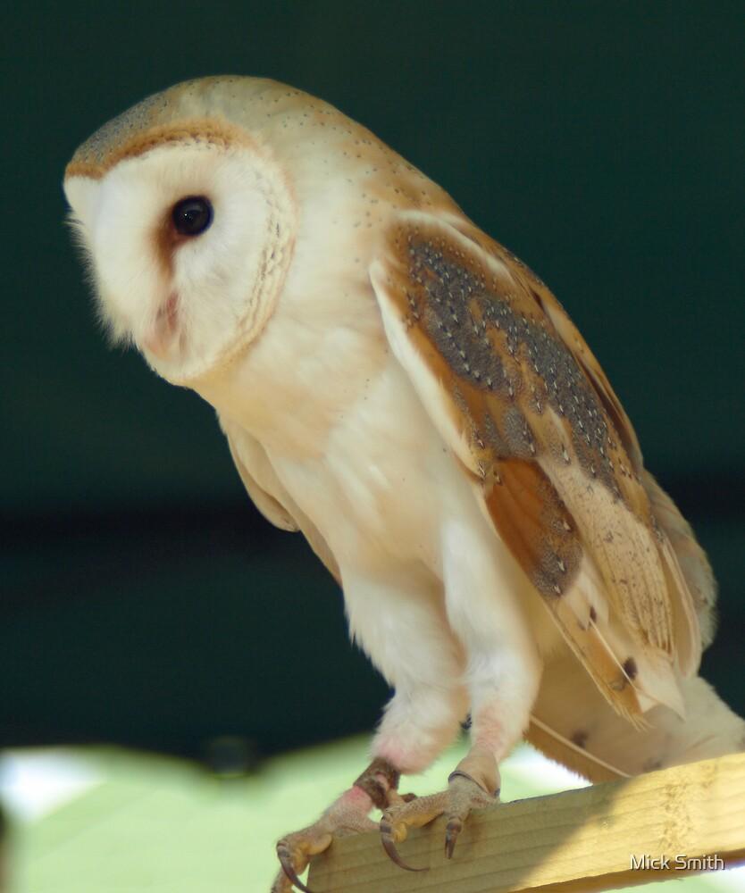 Barn Owl by Mick Smith