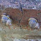 2 snails on wall by armadillozenith