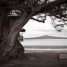 Lone old tree,bench and volcano  by yurix