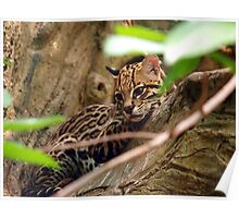 Ocelot Jungle Poster