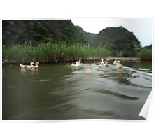 Ducks on the move Poster