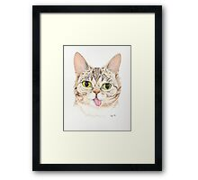 Lil Bub Framed Print