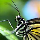 Regal by Far by tigerwings