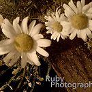 Flower Petals x  by Ruby Adams