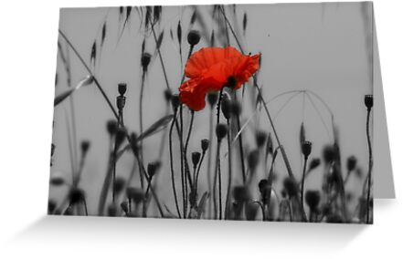Poppy by Pamela Jayne Smith