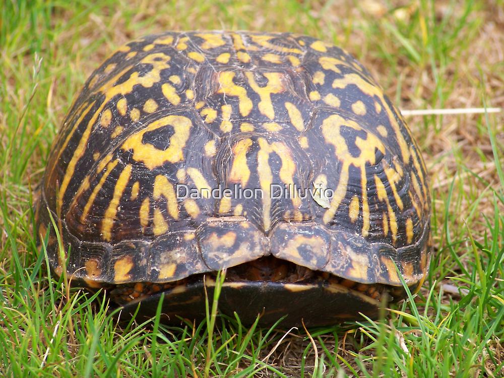 Eastern Box Turtle by Dandelion Dilluvio