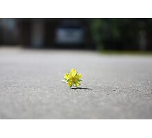 Tiny touch of Yellow Photographic Print