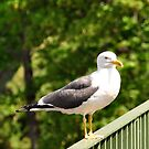 On the Fence!! by Finbarr Reilly