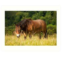grazing exmoor pony Art Print