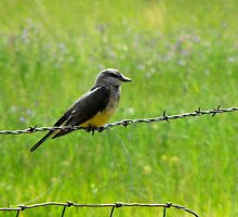 An Unlikey Perch ~Western Kingbird by Jan  Tribe