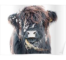 Highland Cow in Snow Poster