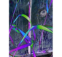 Grass & Fence Combo Photographic Print