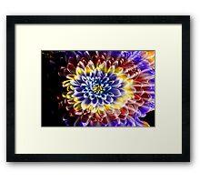 Rainbow Chrysanthemum Framed Print