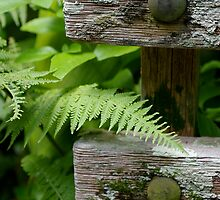 Fern Bench by EileenFrith