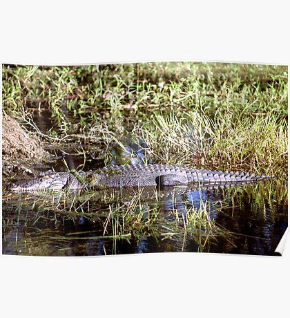 Kakadu Croc Poster