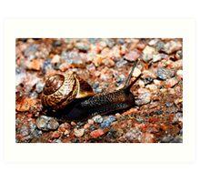 Sliding snail Art Print