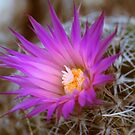Barrel Cactus In Bloom by Arla M. Ruggles