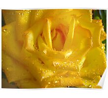 *THE YELLOW ROSE* Poster