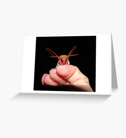 An Elephant in the hand........ Greeting Card