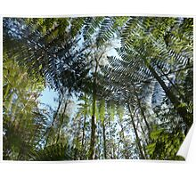 Tree fern in the Forest Poster