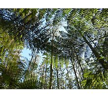 Tree fern in the Forest Photographic Print