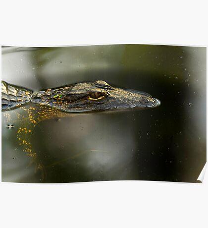 Gator Profile Poster