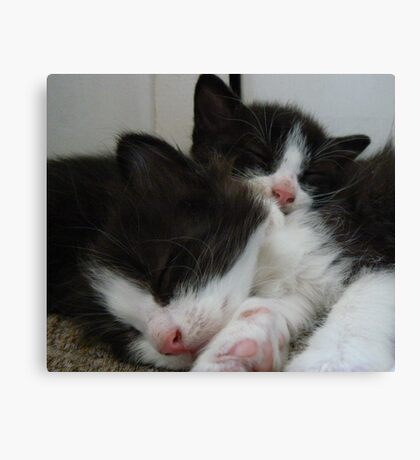 kittens sleeping Canvas Print