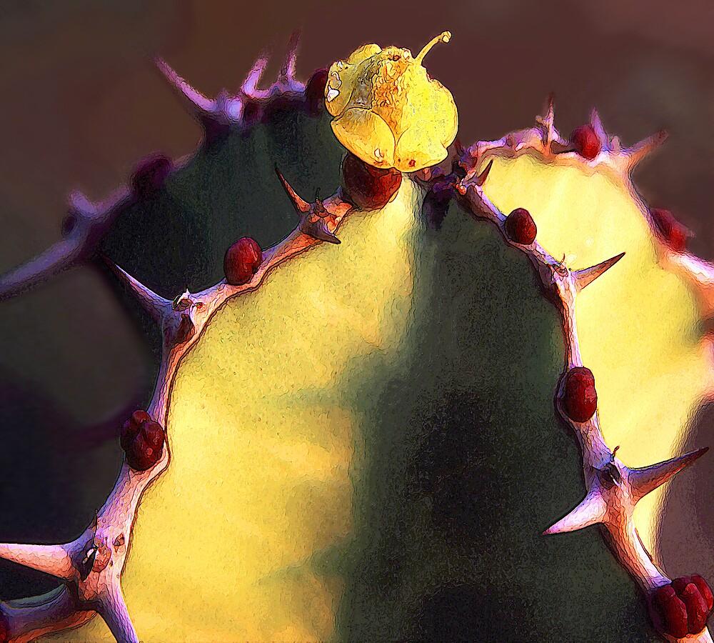 'Cacto Sombrero' by DLUhlinger