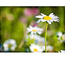 Sunny Summer Day Photographic Print