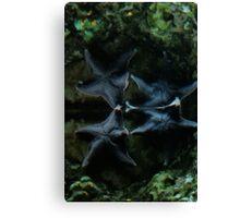 Two Blue Starfish Canvas Print