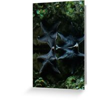 Two Blue Starfish Greeting Card