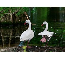 Karate Geese Photographic Print