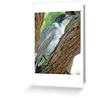 Little Grey Butch Greeting Card