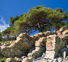 pine tree on the stone by vkph