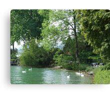 Swans, Lake: Zurich Canvas Print