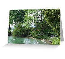 Swans, Lake: Zurich Greeting Card