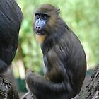 Young Mandrill by DanielTMiller