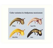 Axolotl Color Variation Poster Art Print