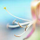 Pastel by Angelique Brunas